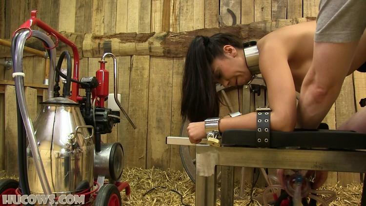 Hucow milking machine farm free porn images