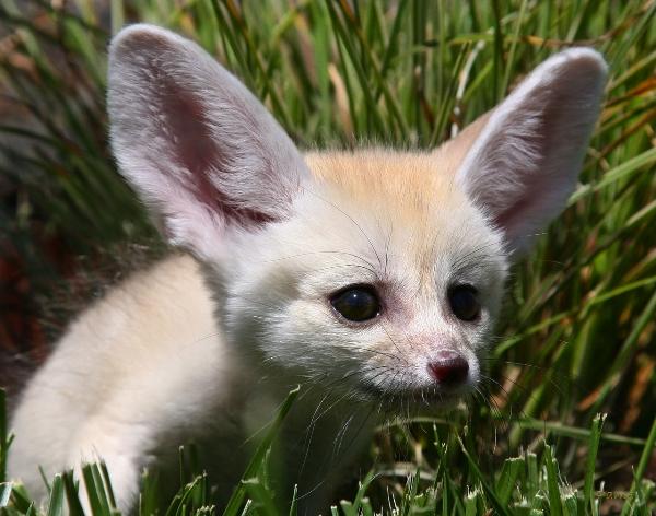 fox6,