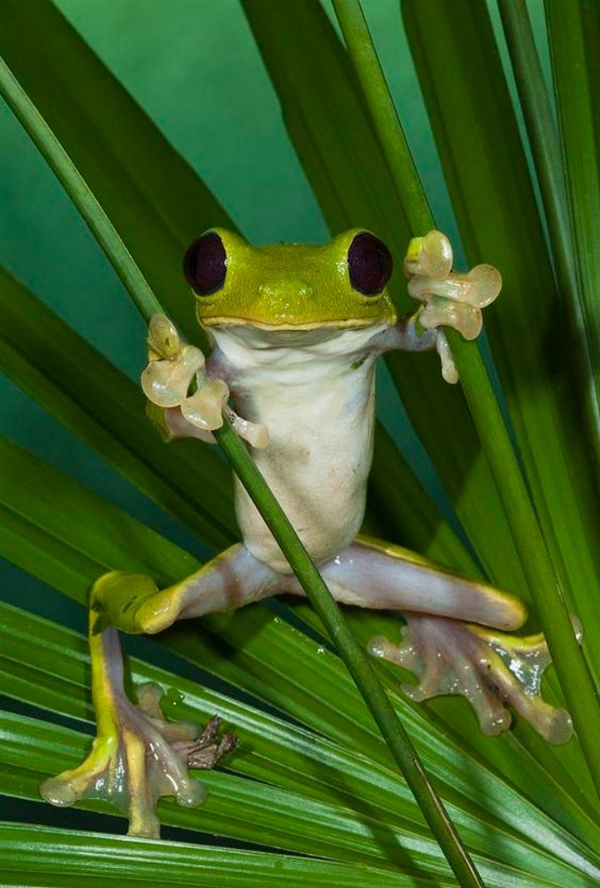 a-GlidingFrog-India,