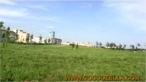 Coccozella-g022_cover_m.jpg